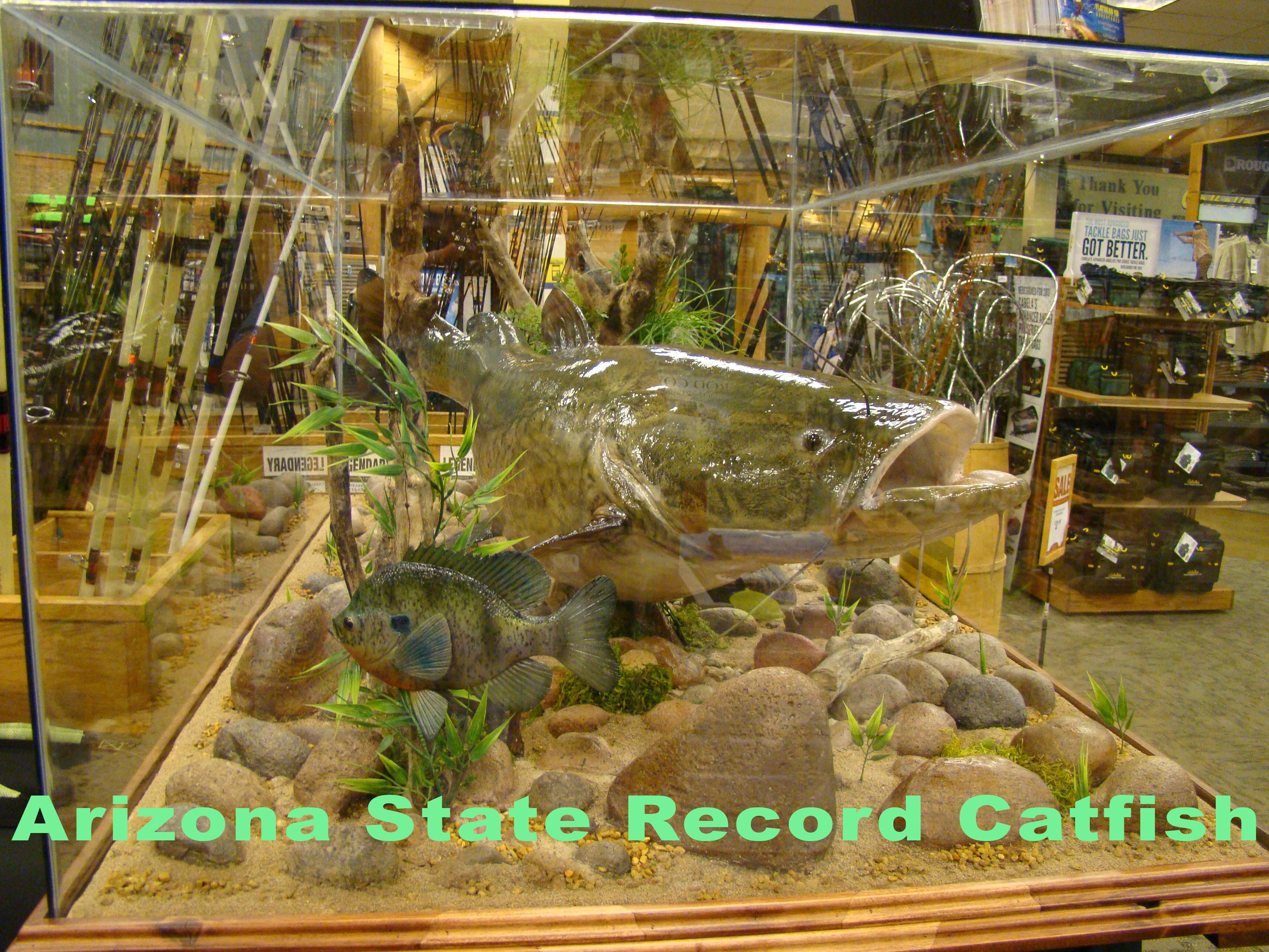 State Record Catfish